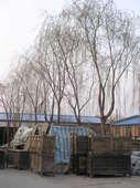 Mobili Mongolia nel cortile di un rigattiere