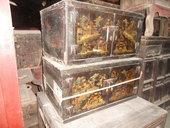 Coppia di mobiletti cinesi con dipinto